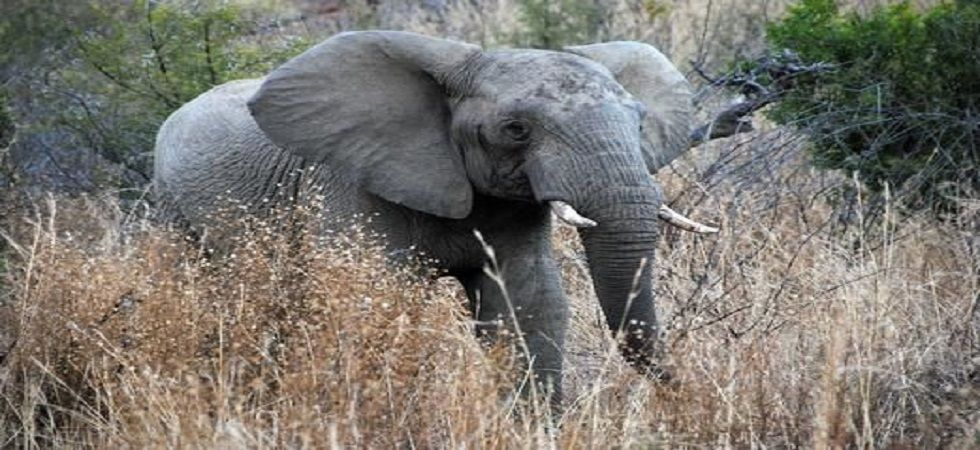 On inspection, authorities found 8.8 tonnes of elephant ivory. (File Photo)