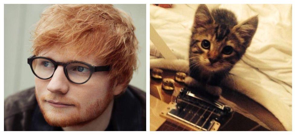 Ed Sheeran's cat, Graham, dies  (Photo: Instagram)