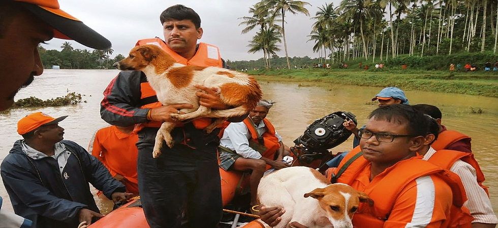 NDRF members rescue a dog from a flood-affected area in Kerala's Wayanad. (PTI/photo)