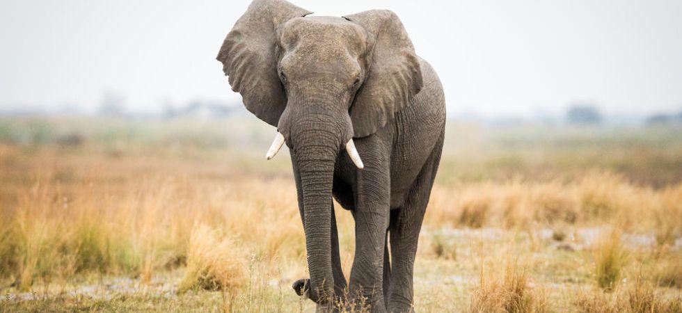 Singapore sale of elephant ivory (Photo Credit: Twitter)