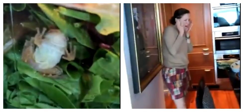 Woman finds 'live' frog in carton of green salads (Photo: Twitter\@kkarliea)