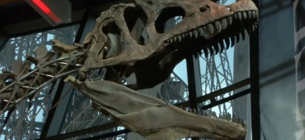 New Dinosaur Species Discovered In Japan (Photo Credit: Twitter)