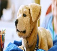 Ghaziabad: Owning A Dog To Cost More, Penalty For Allowing Pets To Defecate In Open