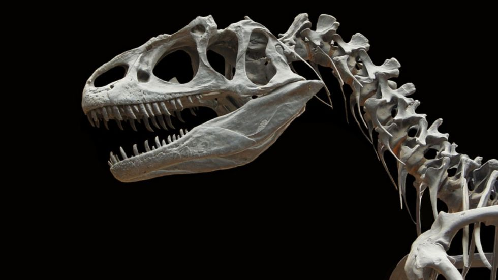 26-feet-long Meat-Eating Dinosaur Discovered in Thailand (Representational Image)