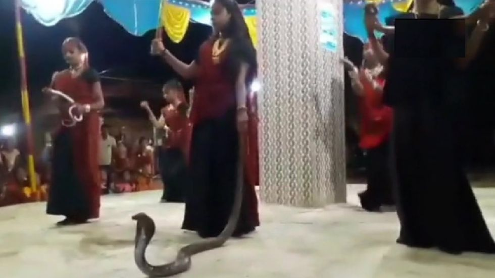 The video of Garba with snake had gone viral on social media.