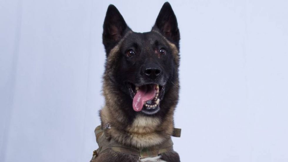 This dog has been part of 50 combat missions