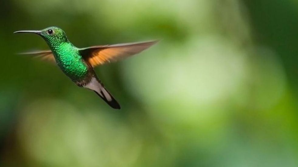Birds Depend On Bacteria For Communication, Mating