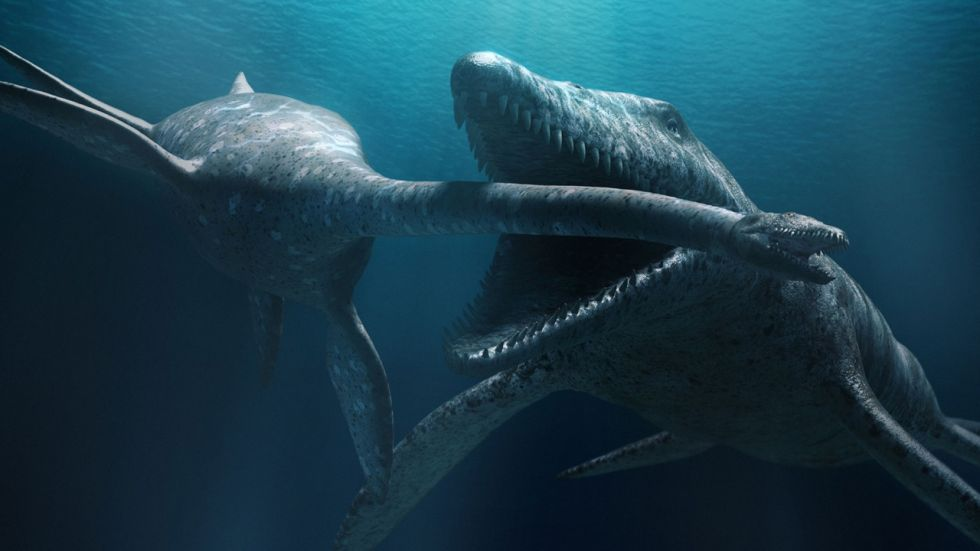 Remains Of Ancient 'Sea Monster' Unearthed in Poland (Representational Image)