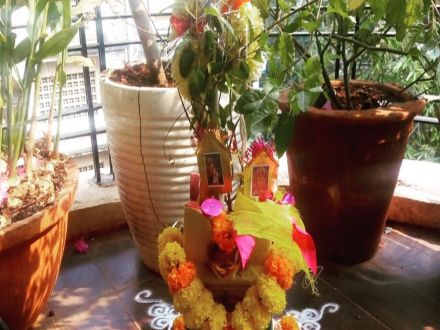 Tulsi Vivah: Myth, Significance, Rituals Observed In This