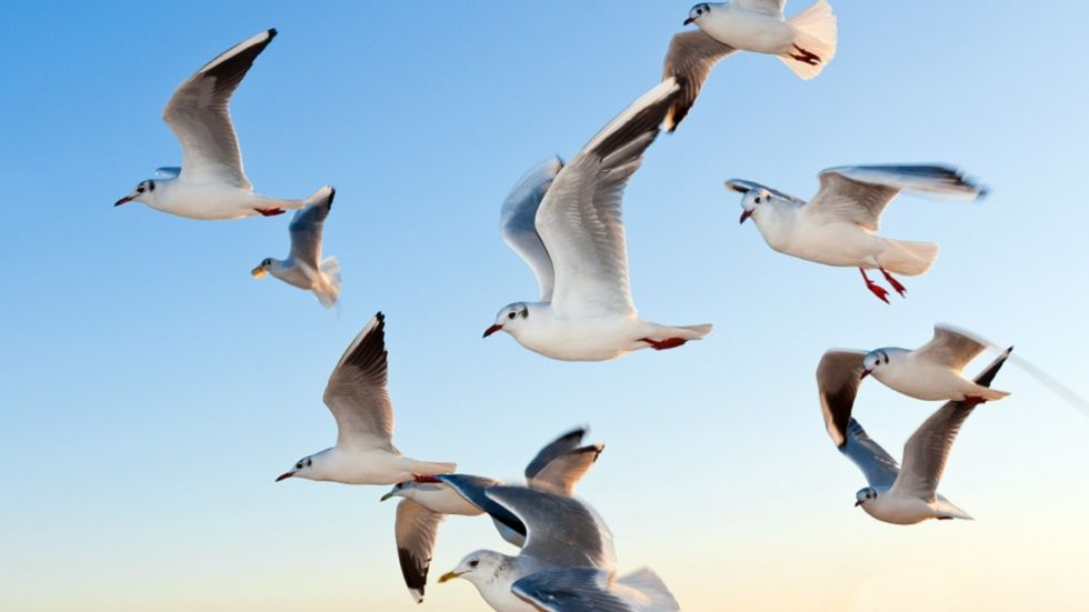 Environmental DNA Test May Reveal Where Birds Flock Together