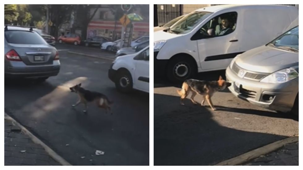 Heart-breaking Footage Loyal Dog Running After Family Who Abandoned It