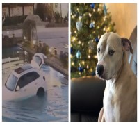 WATCH: 'Very Excited' Dog Drives Owner's SUV Into Pond