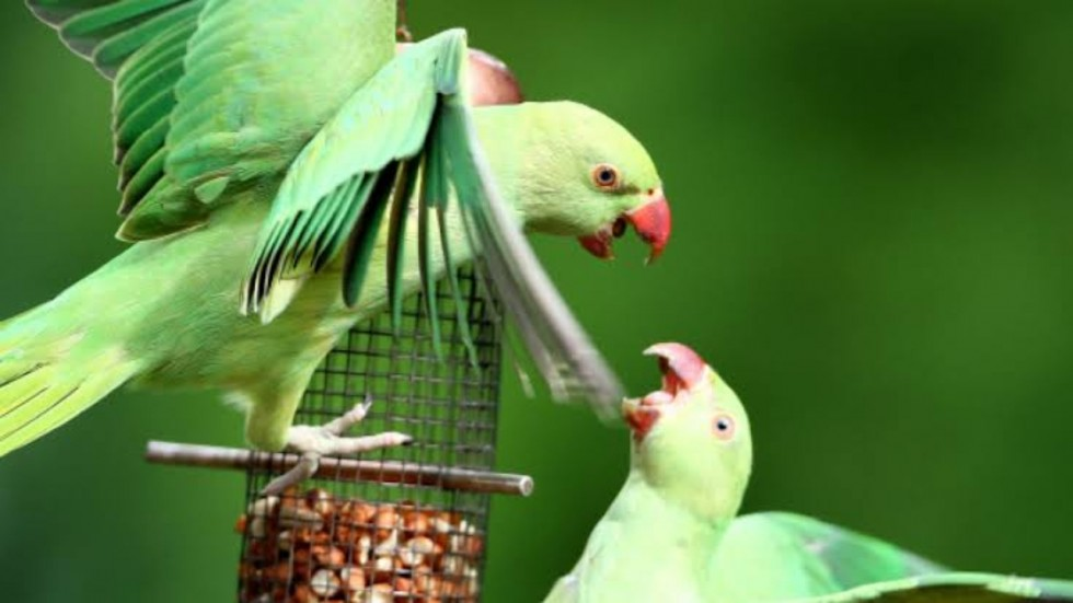 According to the ornithologists, the parrots would help out irrespective of whether the other individual was their 'friend' or not.