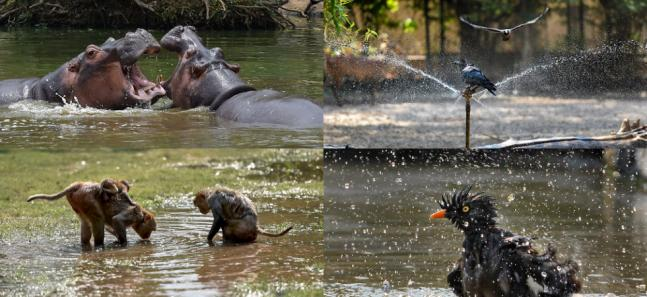 'Wake me up when September ends': Our fluffy friends seek respite from heatwave and how