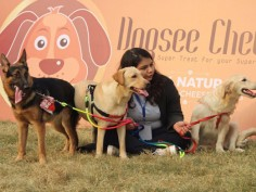 Pets Fed Festival fourth edition at NSIC Grounds Delhi pictures