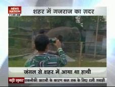 Elephant enters Siliguri, smashes cars and houses