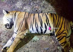 Maneka Gandhi criticises Maharashtra government over tigress Avni's killng