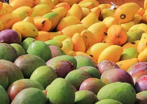 Decline in mangoes price: Consumers cheer but concern for growers